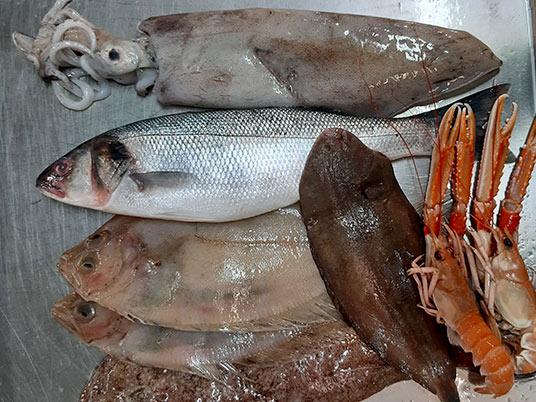 haddock, squid rings, cocochas, conger eel, merling